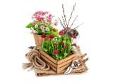 Цветы (40)